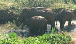 Elephant Green Park
