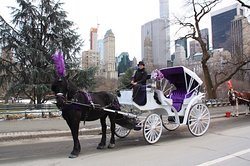 New York City Horse Carriages