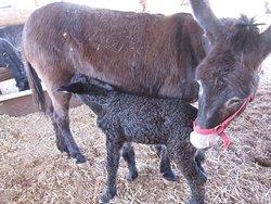 Donkey Safari