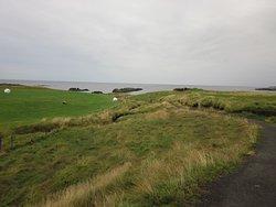 Illugastaðir Farm