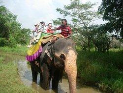 Back Elephant Ride in Habarana