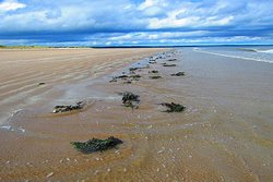 St Andrews West Sands Beach