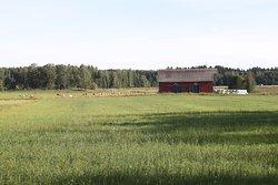 Viikinlahden luonnonsuojelualue