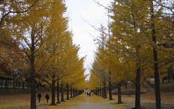 Taman Olahraga Azuma