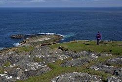 Westray Island