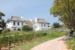 Bouchard Finlayson Winery