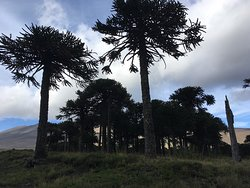 Mapuche Cabin