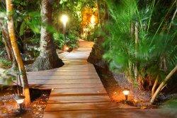 Zimbo Tropical