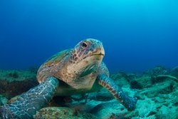 Sporty's Scuba Diving