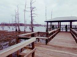 Black Bayou Lake National Wildlife Refuge