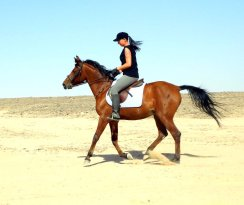 Happy Horse Stable Magawish Horseriding