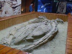 Museo Paleontologico de Caldera