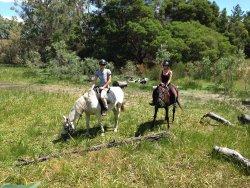 Limestone Coast Horseriding