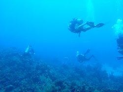 Coconut Tree Divers