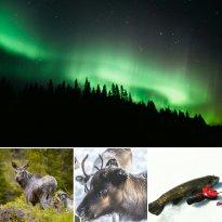 Explore Åre