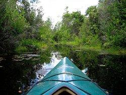 Swamp Explorers
