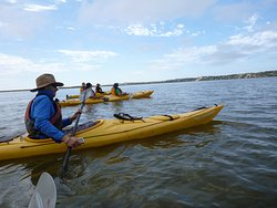 Canoe The Coorong - Day Tours