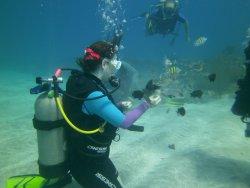 Jamaica Scuba Divers Ltd.