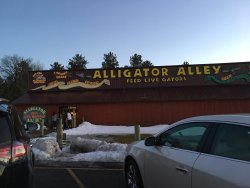 Alligator Alley Adventures