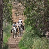 Arthur's Seat Trail Rides