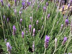 99 Stars Herb Garden