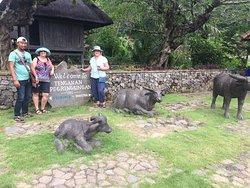 Mesari Bali Tour And Adventure
