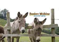 Donkey Walking Adventures