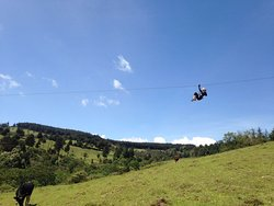 Flying Fox at The Forest