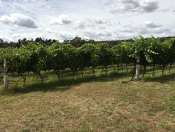 Boireann Winery