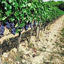 Tuscan Wine Somm