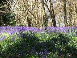 Littleheath Woods