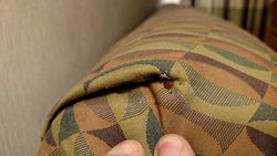 Bed bug in the sofa, open the flap and there were so many!!! Too gross to take a pic