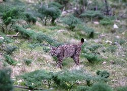 A Great Trip To See the Iberian Lynx