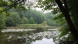 Forêt Domaniale de Meudon