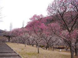 Bairin Park