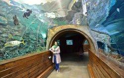 Voronezh Oceanarium