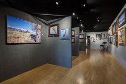 The Aperture Gallery