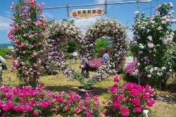 Rien no Rose Garden