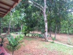 Leesa Villa Safari Resort