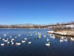 Swan Natural Area