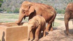 Elephant Nature Lovers Park