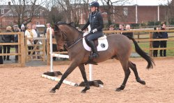 Enjoy daily demonstrations in the Peter O'Sullevan Arena at 11am & 2.30pm