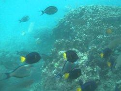Underwater Tour in a Submersible Vessel at Marina Bandar Al Rowdha
