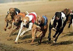 Nottingham Greyhound Stadium
