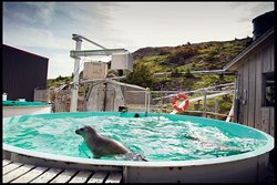 Ocean Sciences Centre Marine Public Education Program