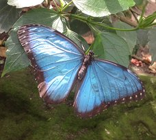 Stratford-upon-Avon Butterfly Farm
