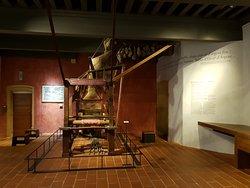 Musée d'Histoire de Lyon