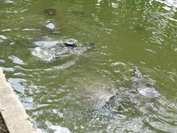 Parque Zoologico La Guaricha