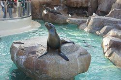 Taman Hiburan SeaWorld San Diego