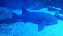 Playa Aquarium